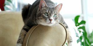 Кот в доме: как вписать в интерьер все необходимые атрибуты для содержания домашнего любимца